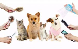ways to groom your pets